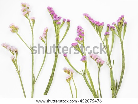 Violet flowers isolated on soft white background.