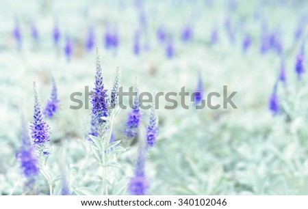 Violet flowers on the meadow.