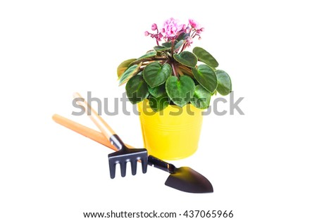Violet in a flowerpot with a shovel and rake isolated on white background - stock photo