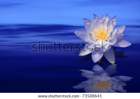 violet lotus flower on colorful water background - stock photo