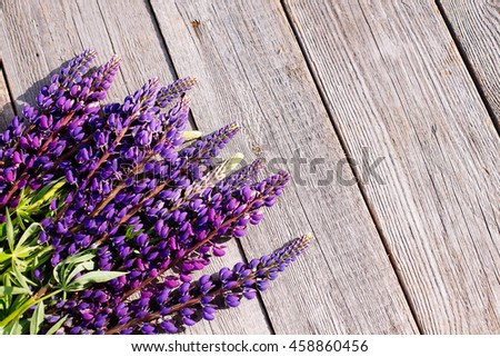 Violet lupines on wooden background.
