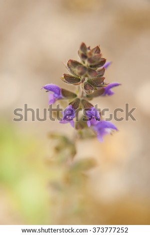 Violet wild flower, vertical frame,  with background out of focus.  - stock photo