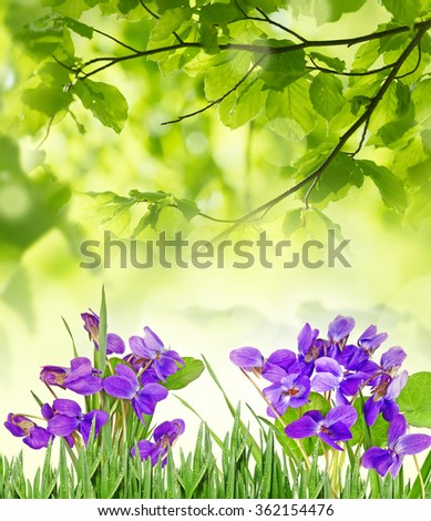 violets in a grass - stock photo