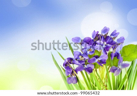 violets in a grass and bokeh background
