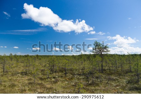 Viru bog reserve area under blue sky