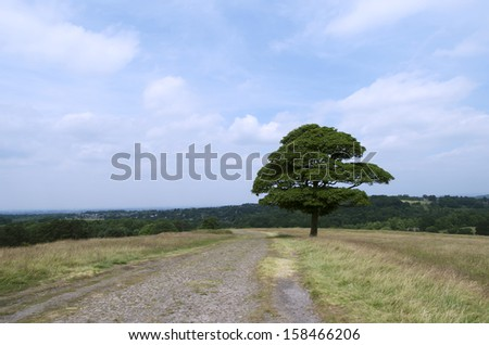 Vitality: This photo was taken on a hill near Manchester. This only tree stands on the hill beside the road represent a strong power of vitality. - stock photo