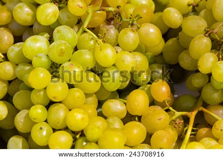vitis background with bunches of sweet grapes - stock photo