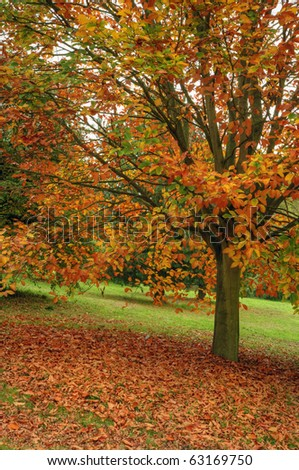 Vivid Autumn Fall scene with excellent detail and vibrant colors