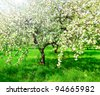 Vivid blooming apple trees in spring park - stock photo