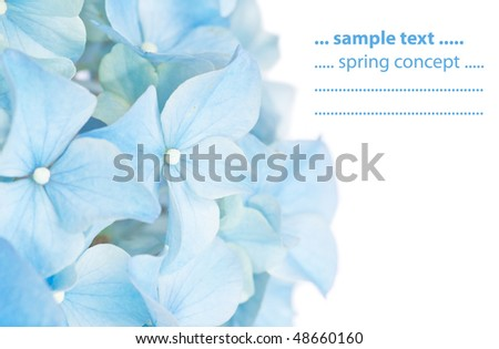 vivid blue spring flora - stock photo