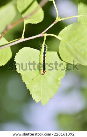 Vivid caterpillar on leaf - stock photo