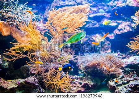 Vivid colorful coral colony reef and tropical fish in the ocean or sea - stock photo