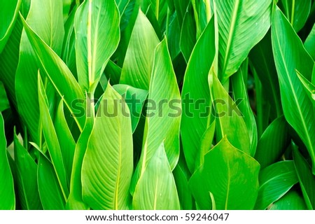 Vivid coloured green leaves close up - stock photo