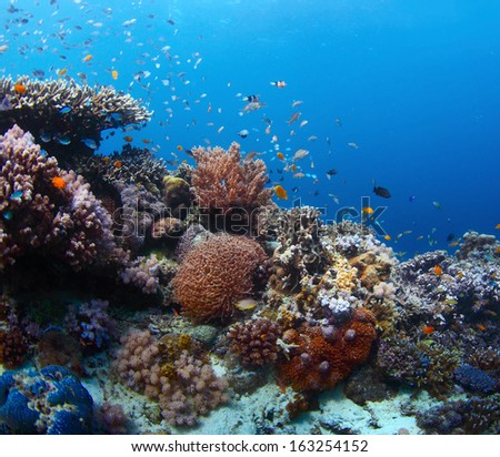 Vivid coral reef with marine creatures - stock photo