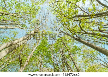 Vivid Green Tree Branches Tips on Bright Blue Sky Background - stock photo