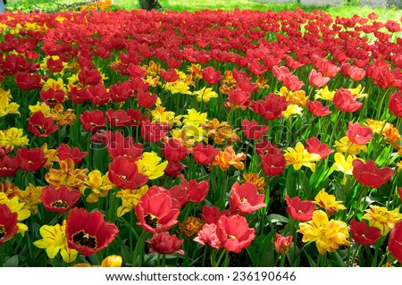 Vivid Meadow Multiple Blossoms  - stock photo