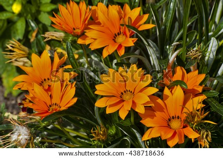 Vivid orange flowers on green background