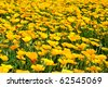 Vivid tranquil floral background with yellow flowers - stock photo