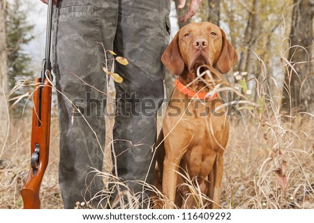 vizsla hunting dog sitting at heel outdoors - stock photo