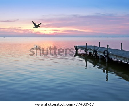 volando a ras del agua - stock photo