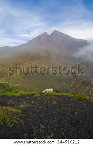 Volcano in Guatemala, central america, horse in landscape - stock photo