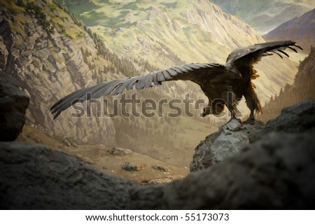 Vulture ready for Take Off - stock photo