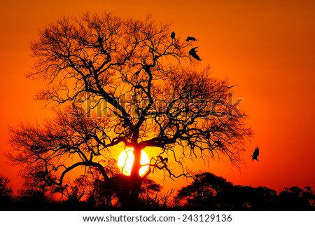 Vultures in a tree in sunset sky