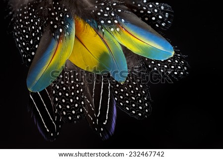 Vulturine of Guinea and ara macao feathers.Nature background. - stock photo