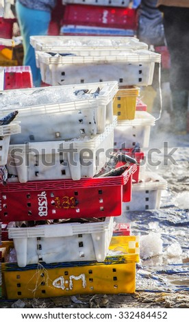 VUNG TAU, VIETNAM - AUG 23,2015: Fish in plastic trays containing chilled with ice on beach