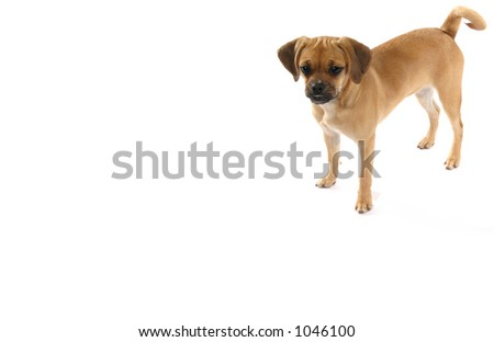 waiting for a treat (with room for text) - stock photo