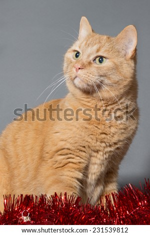 waiting for christmas - red cat looking up - stock photo