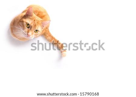 waiting ginger cat - stock photo