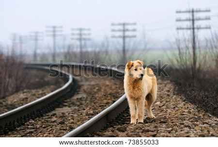 Waiting Lonely Dog - stock photo