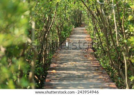 walk way in mangrove forest, other name is inter tidal forest