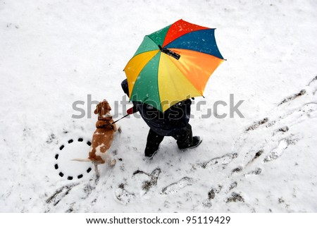 Walk with a dog - stock photo