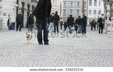Walking a small city dog, chihuahua, crowd of people in background - stock photo
