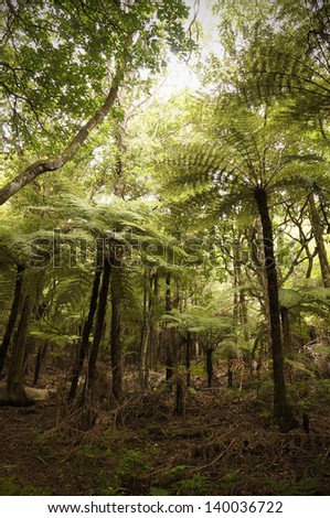 Walking and hiking through virgin rainforest in New Zealand with giant tree ferns. - stock photo