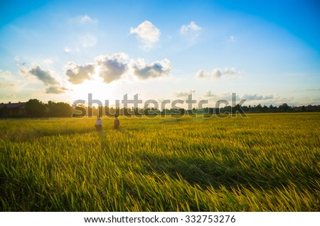 walking at paddy field during sunset and vintage image.