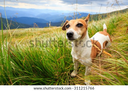 Walking dog pet in the fresh air. Nature outside. Series of photos - stock photo