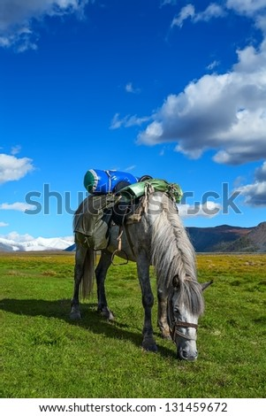 Walking horse on a green grass against glaciers (Russia, Altai). - stock photo