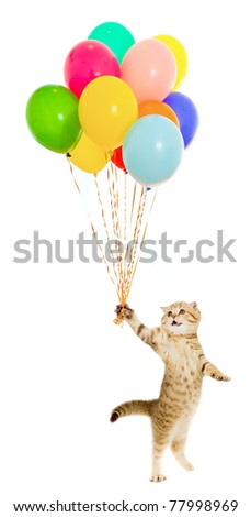 walking kitten or cat  tabby with colorful balloons isolated - stock photo