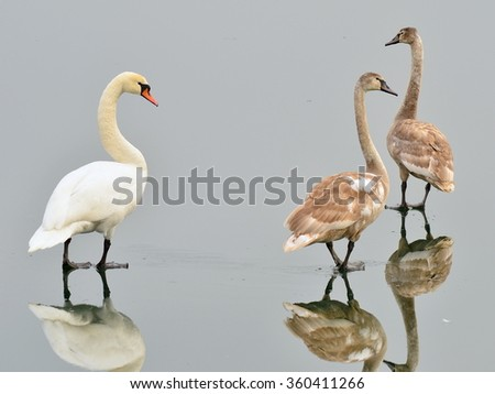 walking on the water surface - stock photo