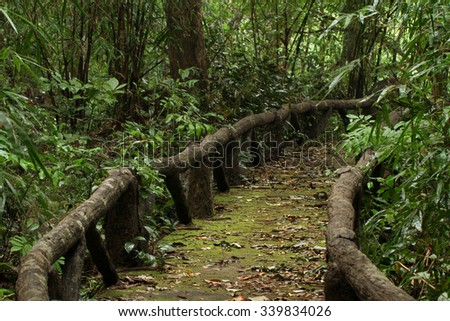 Walking path in national park of Thailand - stock photo