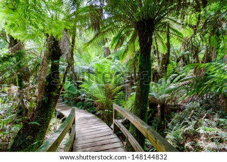Walking path in tropical rain forest among lush ferns - stock photo