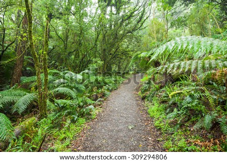 Walking track through lush green ferny rainforest at Melba Gully in the Otways, near the Great Ocean Road in Victoria, Australia - stock photo