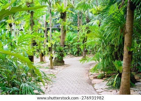 Walking trail in lush green tropical forest. - stock photo