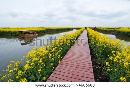 Walkway along canal in Rapeseed field, Xinghua China - stock photo