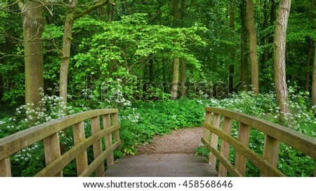 Walkway and a bridge in Stochemhoeve forest park in the Netherlands