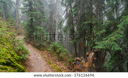 Walkway between the age-old spruces