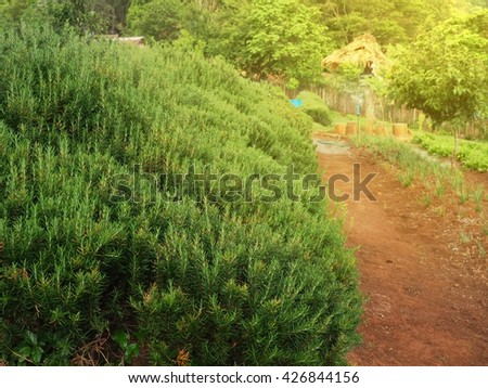 Walkway in a beautiful and peaceful garden with tree and flower in warm evening sun - stock photo